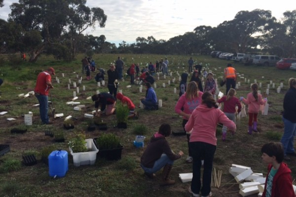 Strath Strikers planting trees