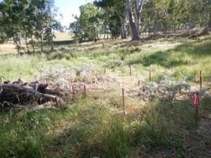 Artichoke thistle control - various plots
