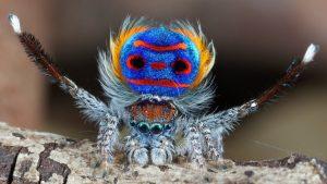 Spider surprises