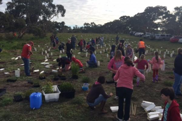 Strath Strikers planting trees