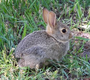 rabbit control is essential