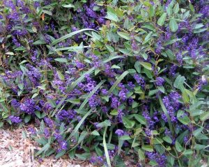 Mount Barker Wildlife Gardening
