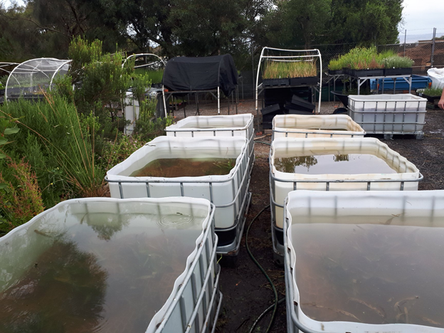tubs of underwater plants